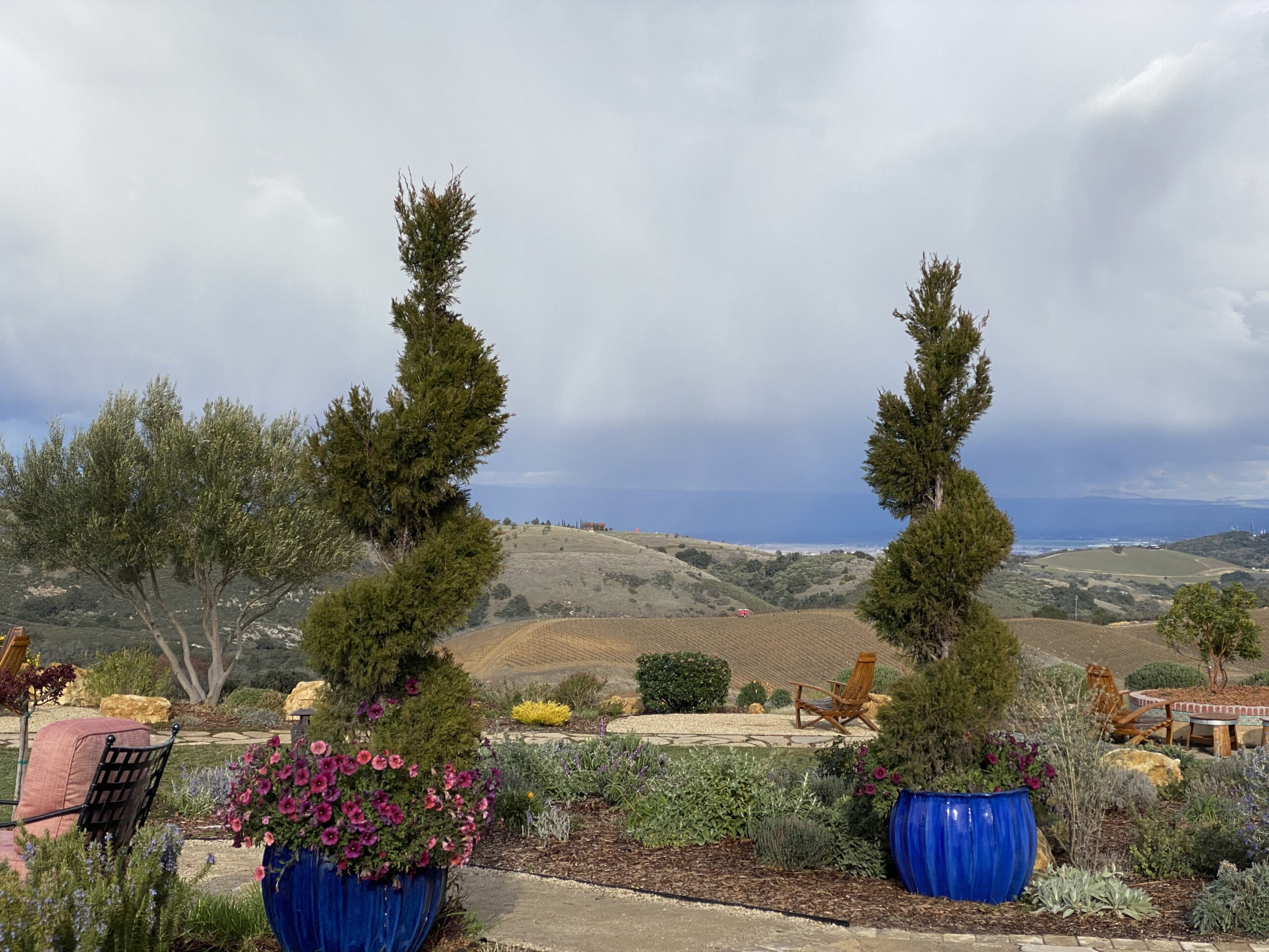 View from Daou Winery of Valley with Topiaries Surrounding It
