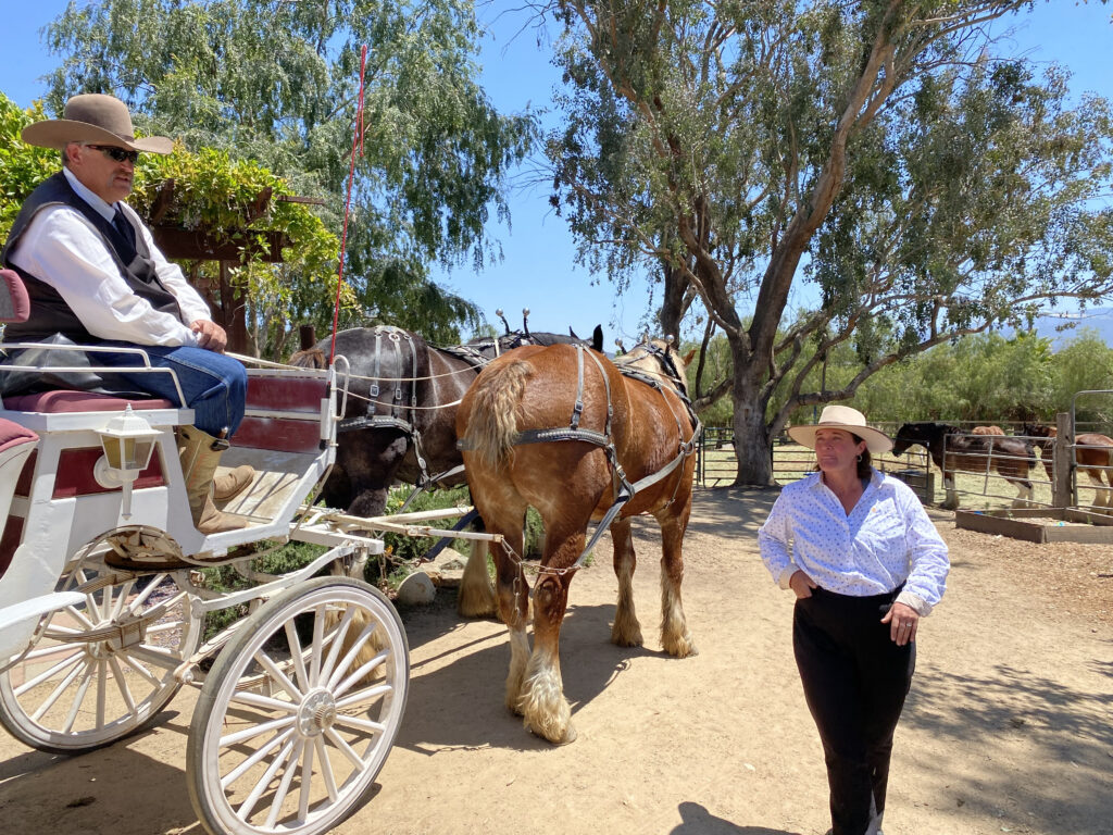 Temecula Carriage Company Clydesdales with Marika and Mark Matson
