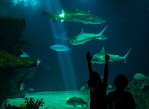 Aquarium with Large Fish and Children Reaching Out to Touch the Tank by Marble Street Studio