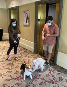 Two Dogs at Westin Led By Owners